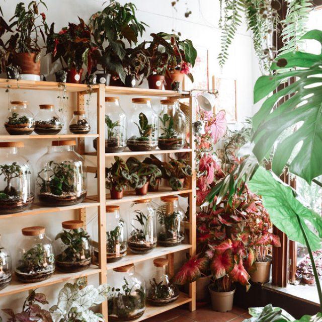 Casa Pampa, un concept store de terrariums à Barcelone