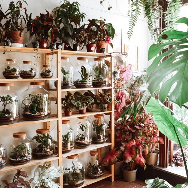 Casa Pampa, un concept store de terrariums à Barcelone 8