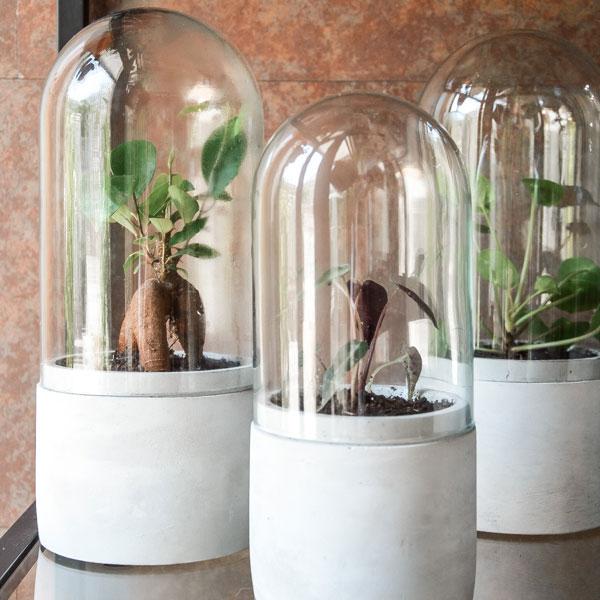 Casa Pampa, un concept store de terrariums à Barcelone 6